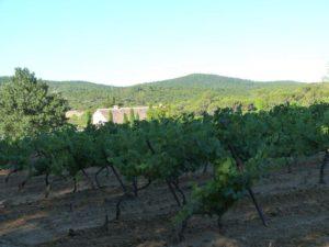 Les vignes environnantes