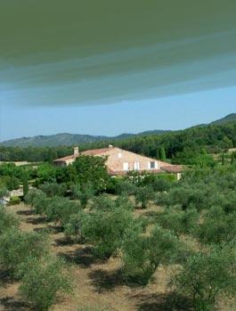 200 Olivenbäume